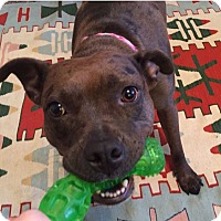Adopt A Pet :: Phoebe - Pittsburgh, PA