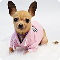 Adopt A Pet :: *Acana Kibble - Pittsburg, CA