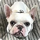 Adopt A Pet :: Rainier