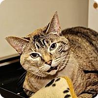 Adopt A Pet :: Samantha - Lincoln, NE