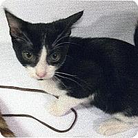 Adopt A Pet :: Oreo - Tustin, CA