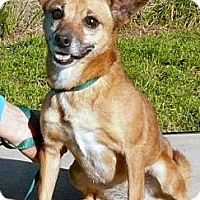 Chihuahua/Dachshund Mix Dog for adoption in Rock Hill, South Carolina - Winnie
