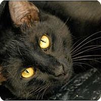 Adopt A Pet :: Lodi - Garland, TX