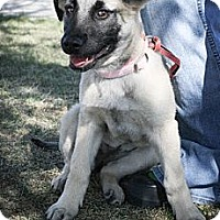 Adopt A Pet :: Kiri - Broomfield, CO