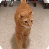 Adopt A Pet :: Gerry - Modesto, CA