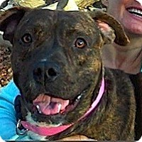 Adopt A Pet :: SMANTHA - Valley Village, CA