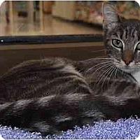 Adopt A Pet :: Trixie Belle - Modesto, CA