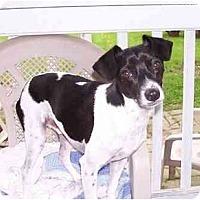 Adopt A Pet :: Prince - Albany, NY
