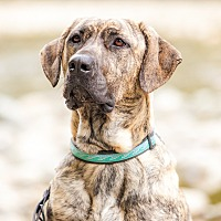 Adopt A Pet :: DIESEL - North Vancouver, BC