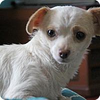 Adopt A Pet :: Vanna - Yuba City, CA