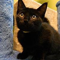 Adopt A Pet :: B.P. - The Colony, TX