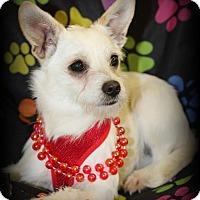 Adopt A Pet :: Molly - Lodi, CA