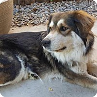 Adopt A Pet :: Bailey - Albuquerque, NM