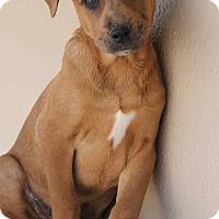 Adopt A Pet :: Milo - Yuba City, CA