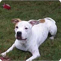 Adopt A Pet :: Tucker - Lutz, FL