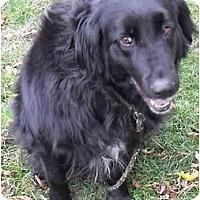 Adopt A Pet :: Dinka - Meridian, ID
