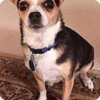 Adopt A Pet :: Skip - Somers, CT