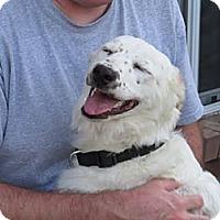 Adopt A Pet :: Cain - New Boston, NH