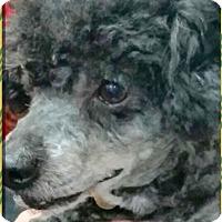 Adopt A Pet :: Frankie - Gilbert, AZ