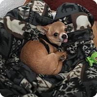 Adopt A Pet :: Tanner - Cedar Rapids, IA