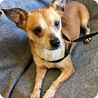 Adopt A Pet :: Coach - Phoenix, AZ
