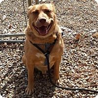 Adopt A Pet :: Axel - Templeton, MA