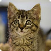 Adopt A Pet :: Denali - DFW Metroplex, TX