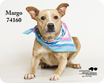 Pit Bull Terrier Mix Dog for adoption in Baton Rouge, Louisiana - Margo