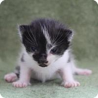 Adopt A Pet :: Phantom - Alpharetta, GA