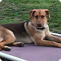 Adopt A Pet :: Braden - Hayes, VA