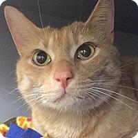 Adopt A Pet :: Oakley - Springdale, AR