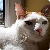 Adopt A Pet :: Oliver - Alexandria, VA
