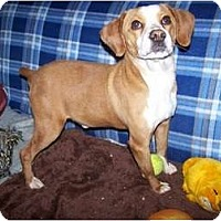 Adopt A Pet :: Oliver ADOPTED!! - Antioch, IL
