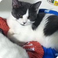Adopt A Pet :: Monkey - Hamilton, ON