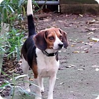 Adopt A Pet :: Ellie - Palm Bay, FL