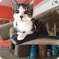 Adopt A Pet :: Junior - Alexandria, VA