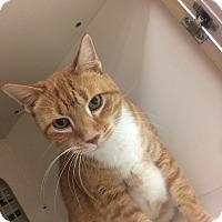 Adopt A Pet :: Charlie - Stafford, VA