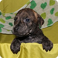 Adopt A Pet :: Beast ( Beauty & The Beast Cast ) - Frederick, MD