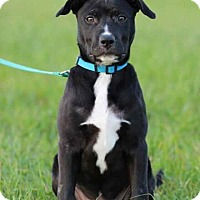 Adopt A Pet :: Walter - Spring, TX