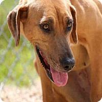Adopt A Pet :: CONNIE - Lacombe, LA