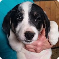 Adopt A Pet :: Jose - Lexington, KY