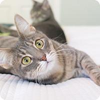 Adopt A Pet :: Eliza - Chicago, IL