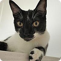 Adopt A Pet :: Emmy - Phoenix, AZ