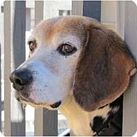 Adopt A Pet :: Dexter - Waldorf, MD