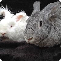 Adopt A Pet :: Sullivan & Josie - Watauga, TX