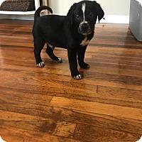 Adopt A Pet :: Cane - Jackson, MS