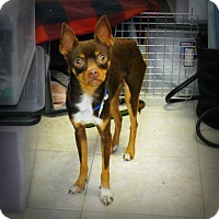 Adopt A Pet :: Martie Max - Casa Grande, AZ
