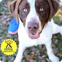 Adopt A Pet :: Teal - Bradenton, FL