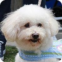 Adopt A Pet :: Nicholas - La Costa, CA