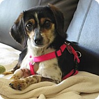 Adopt A Pet :: Mandy - Indianapolis, IN
